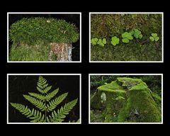 Details im Alzgerner Forst 1