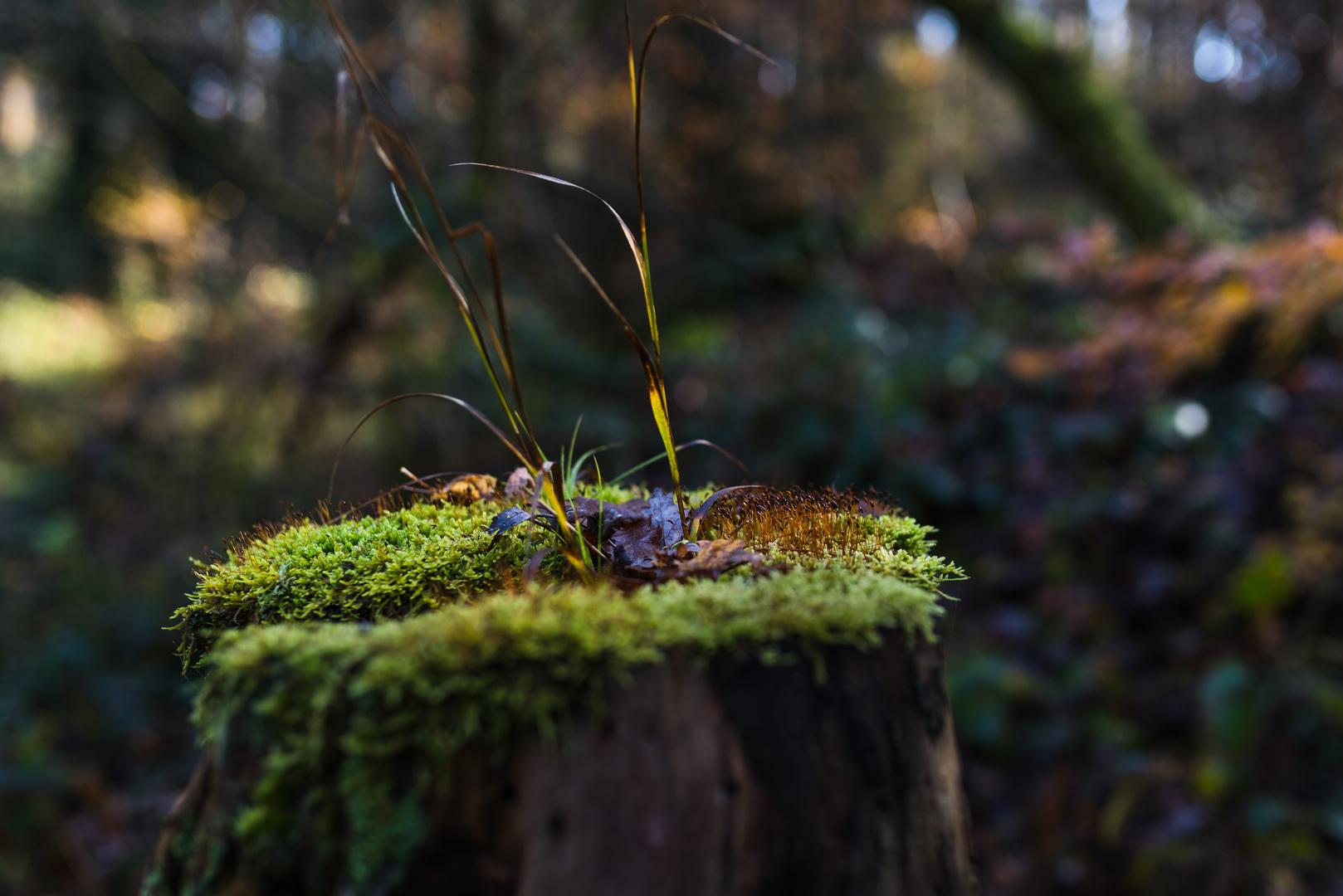 Details im Wald