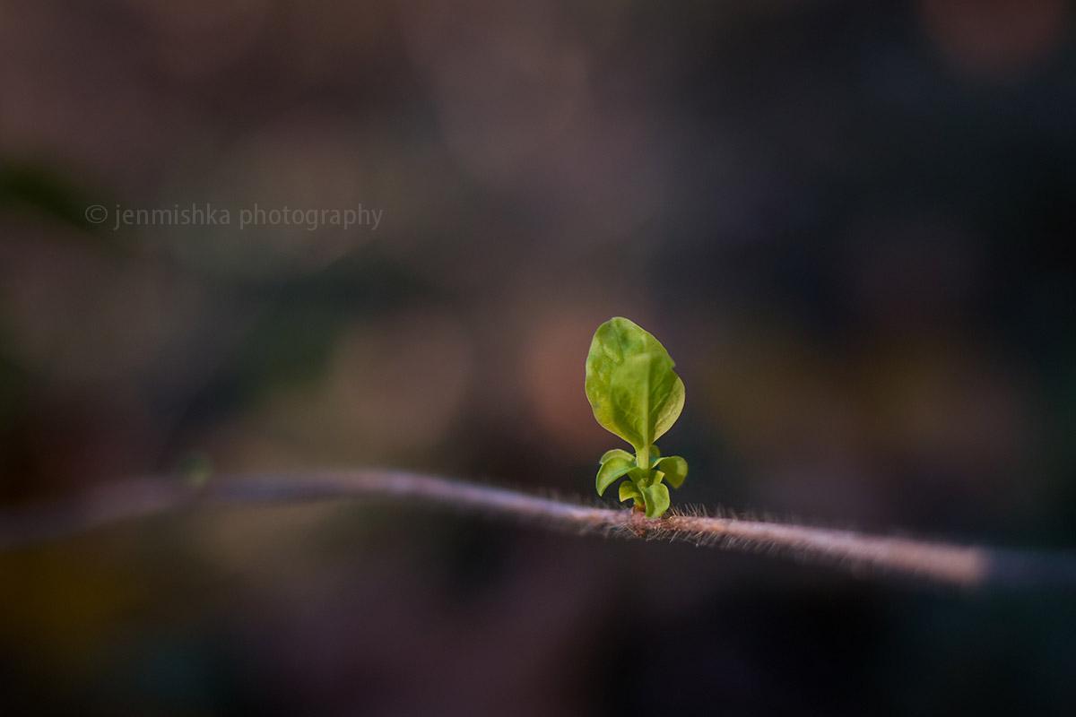 Details in der Natur