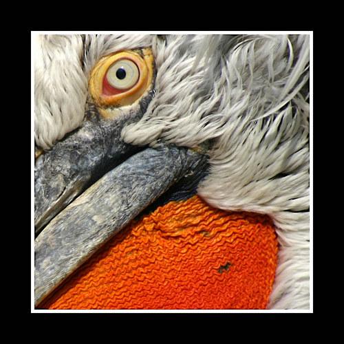 Details of a bird