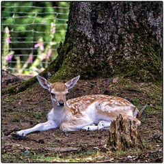 Deutschland im Quadrat - Bambi