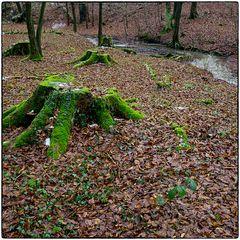 Deutschland im Quadrat - Blutbachtalwaldbaumstümpfe