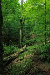 Deutschlands Urwald