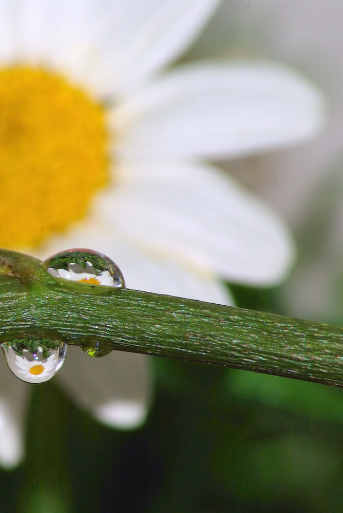 Deux gouttes... Trois fleurs