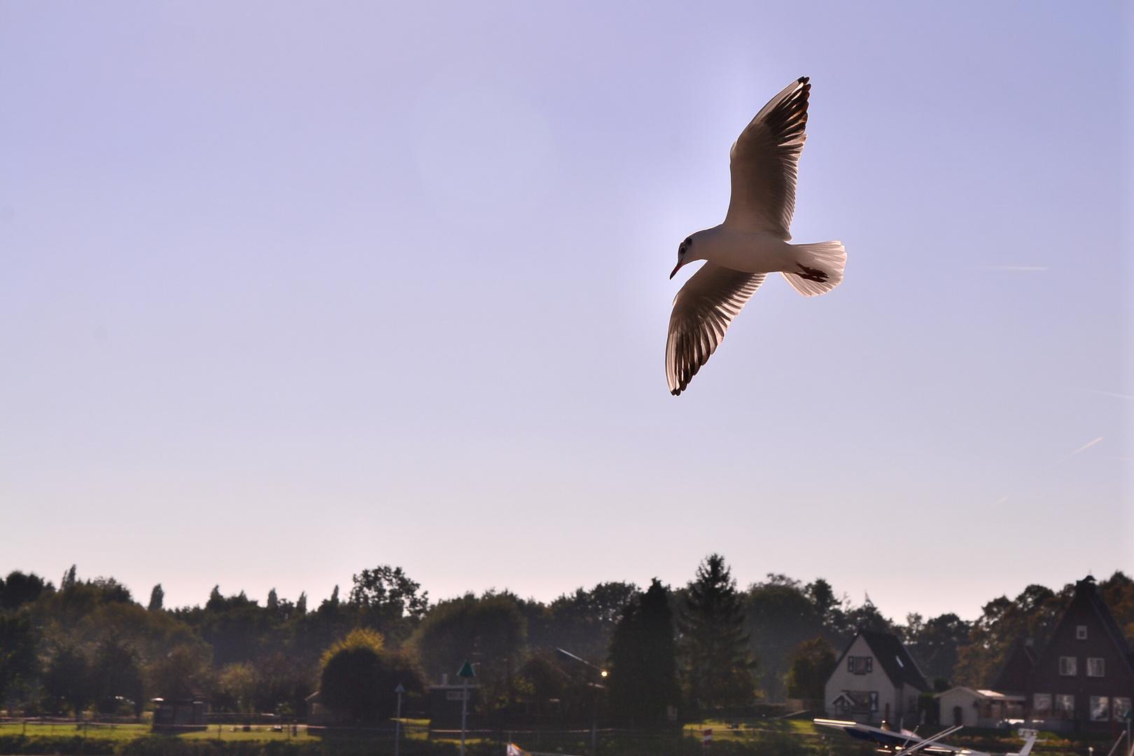 Deventer Vogel Oktober 2016
