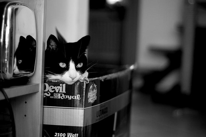 Devil Royal