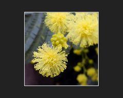 Dezember-Blüten