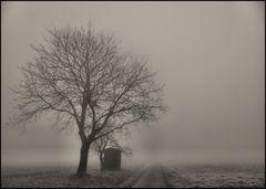 Dezember Nebel 2