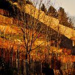 Dezember Sonne auf kahlen Weinbergen