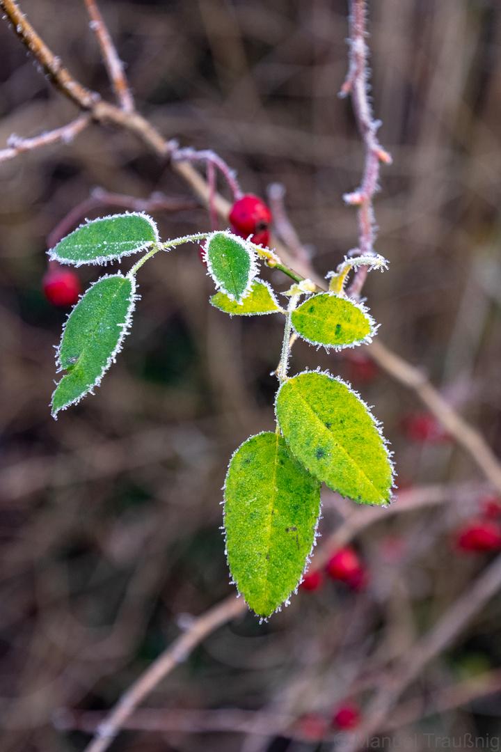 Dezember und noch so grün