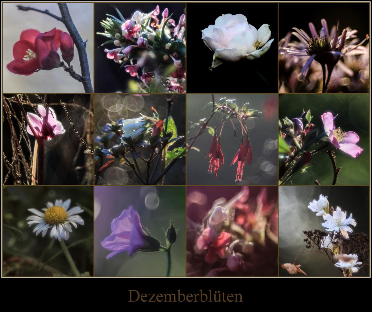 Dezemberblüten