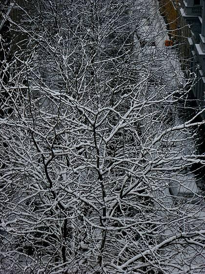 Dezembermorgen in Wien