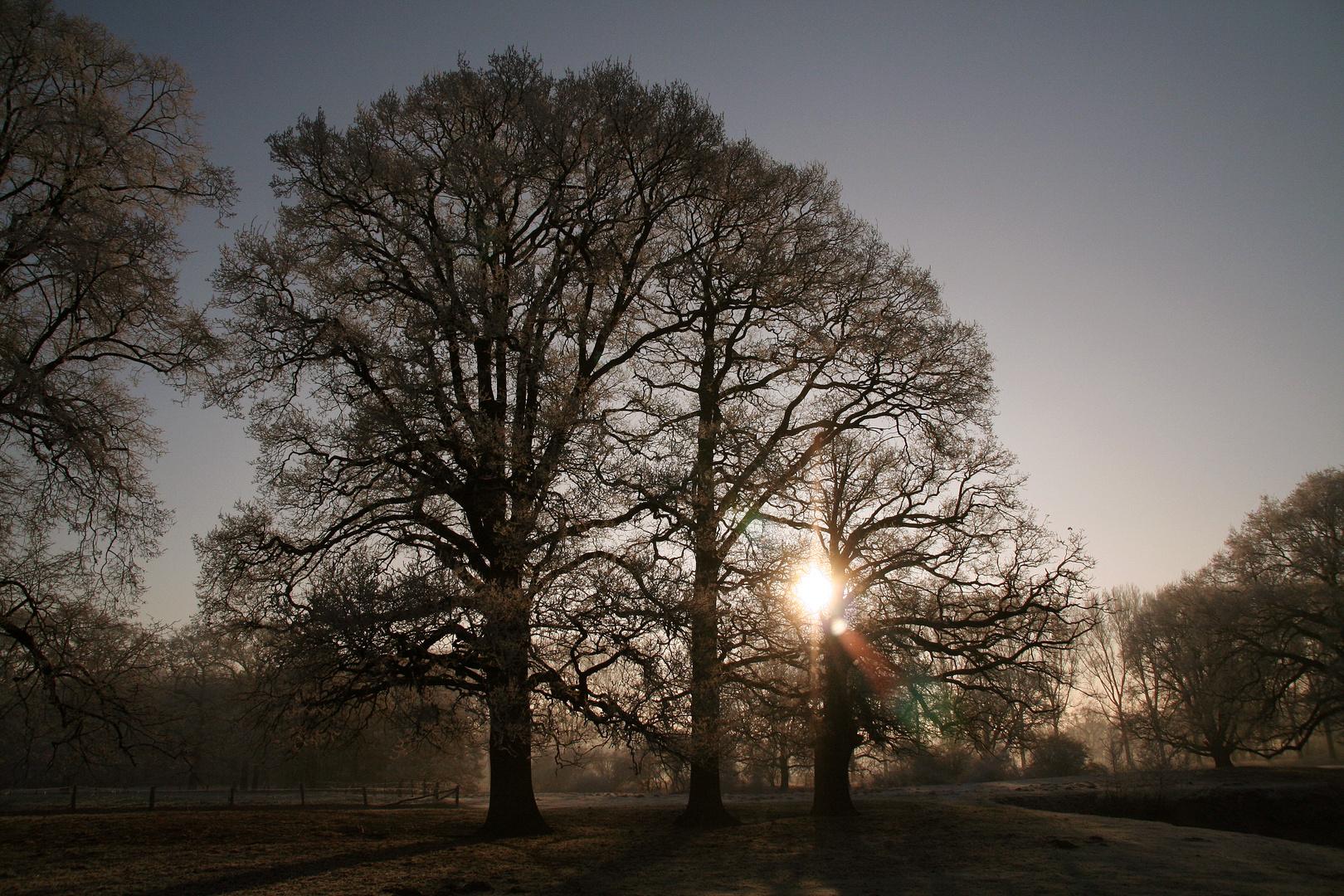 - Dezembersonne im Münsterland -