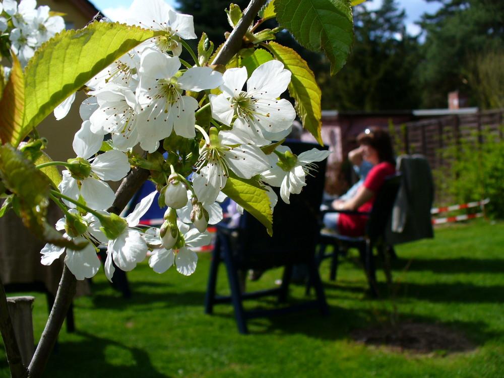 Dezentes Feiern der Baumblüte