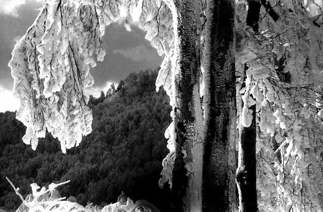 D'hiver dans les Montagnes Gutinului - Maramures 1988 - Ro.