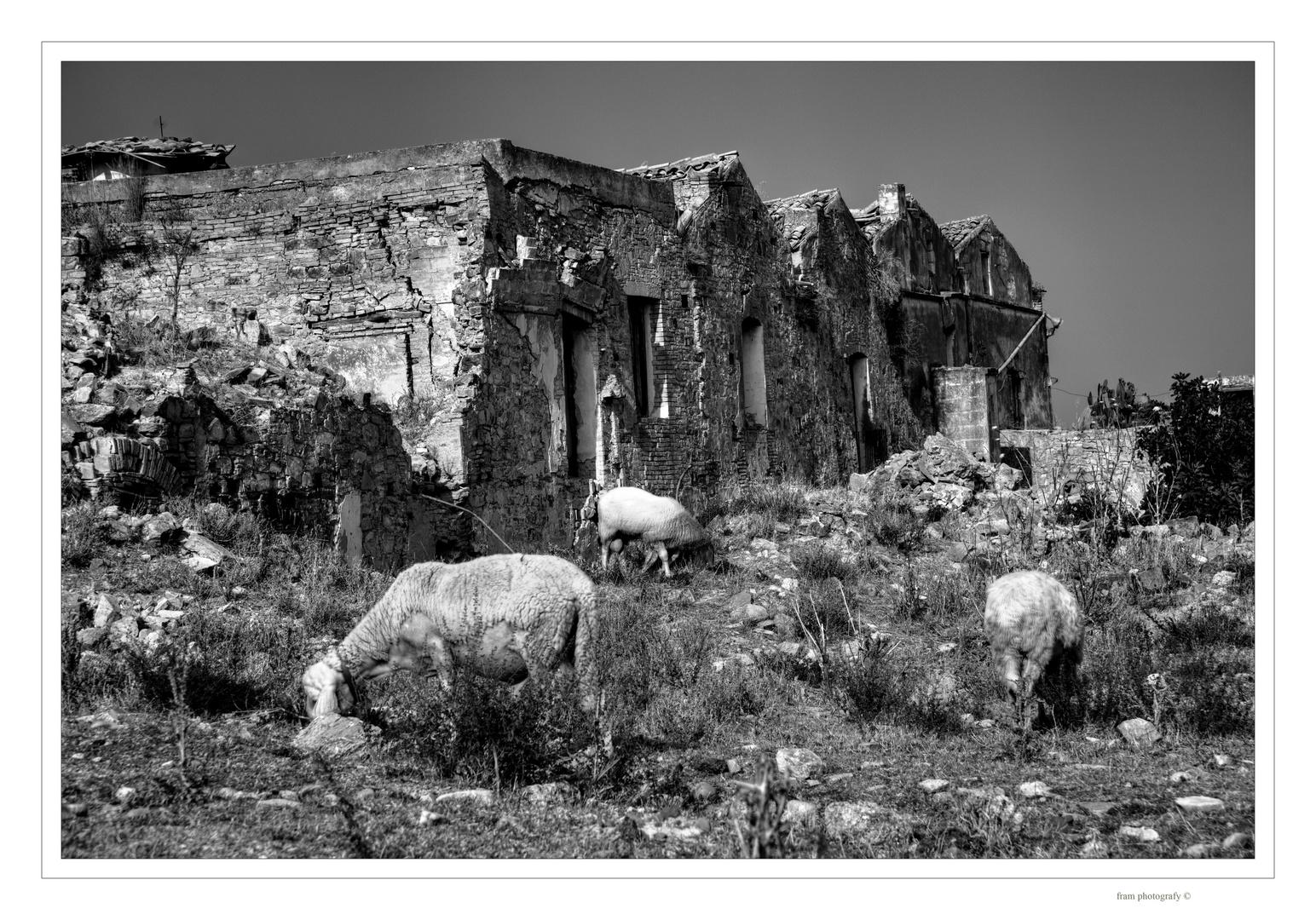 di armenti ...  di rovi ... e di pietre