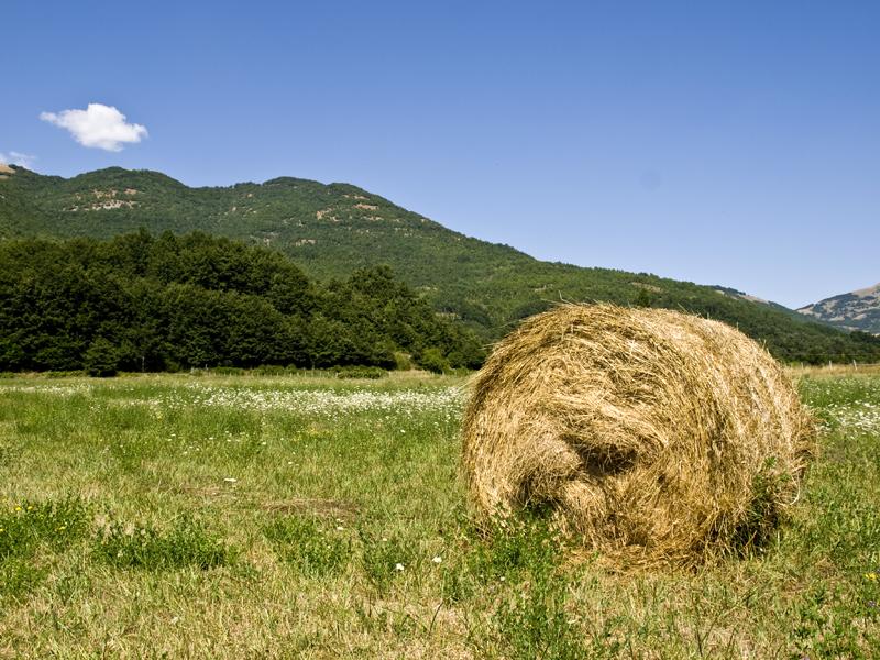 Di erba, paglia e altre amenità