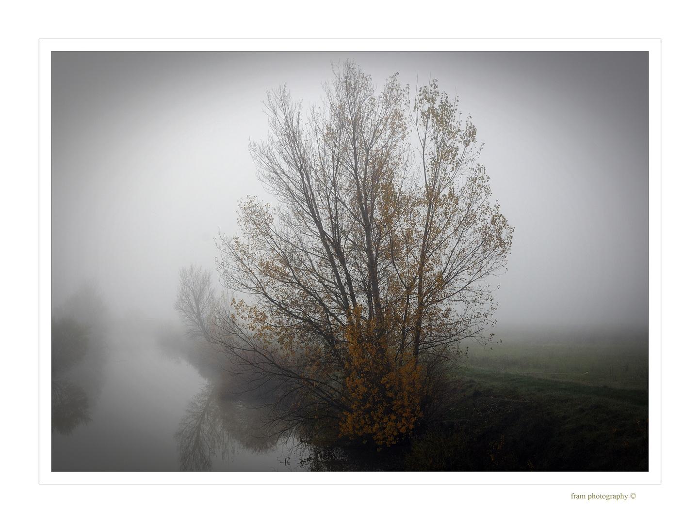 di nebbia di acqua e di foglie