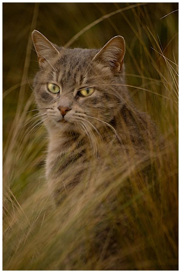 Diabolo dans les herbes .............