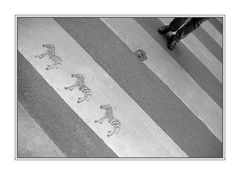 Diagonale (1) Zebras streifen ...