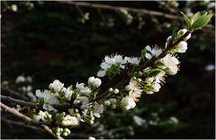Diagonale fleurie