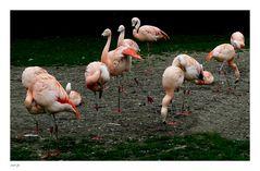 diagonales Flamingokontrastprogramm