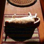 """Diagram of Feline Eclipse"""