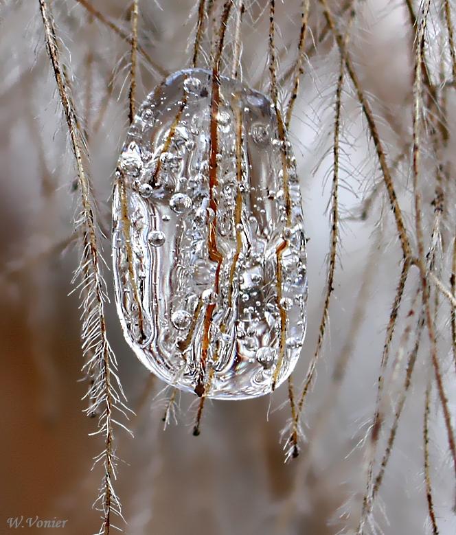 Diamant am Strauch