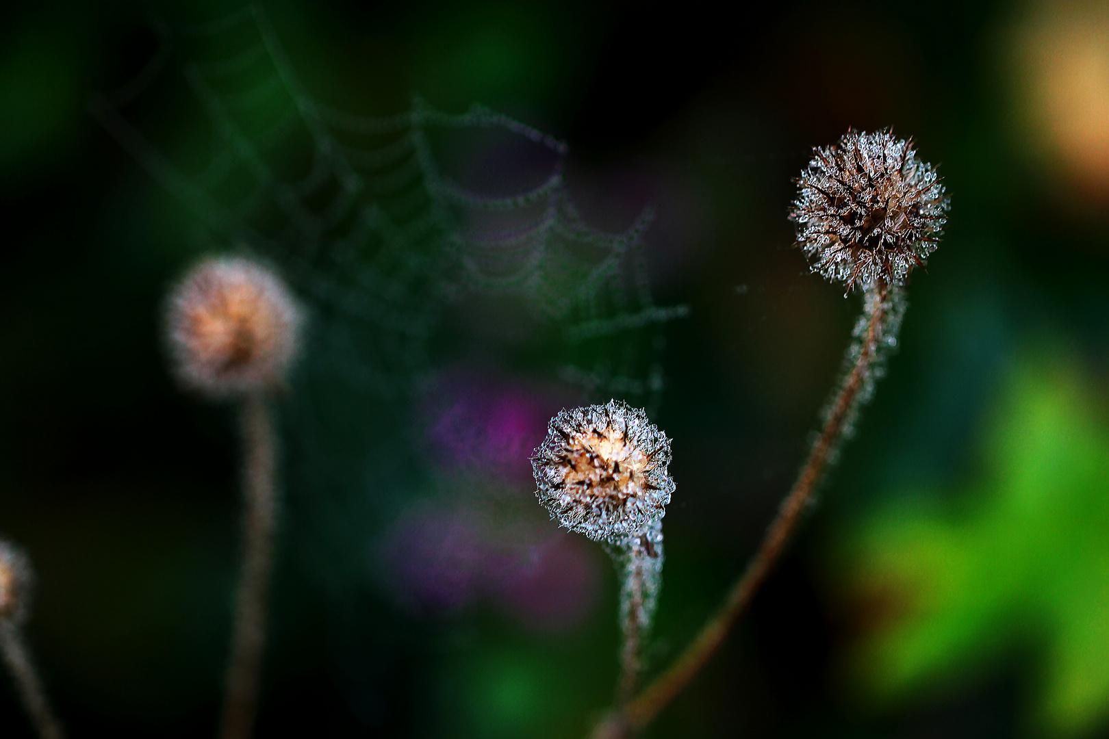 Diamanten bewacht von Spider