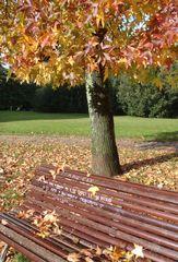 dichiarazione d amore su una panchina.....alla Prèvert