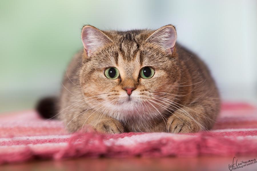 Fette Katzen Spiele