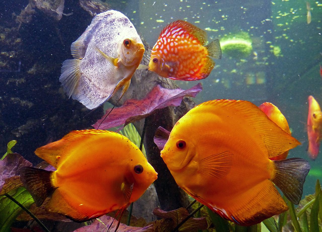 dicke Fische