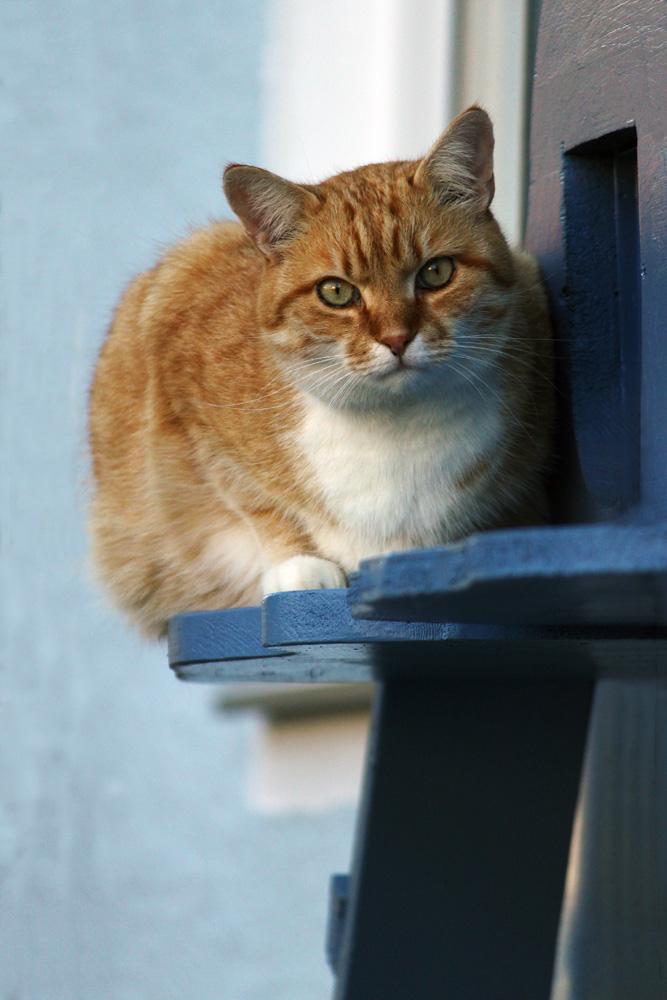 dicke Katze auf dem Fensterbrett