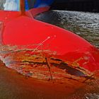 dicke Nase...oder der tote rote Fisch