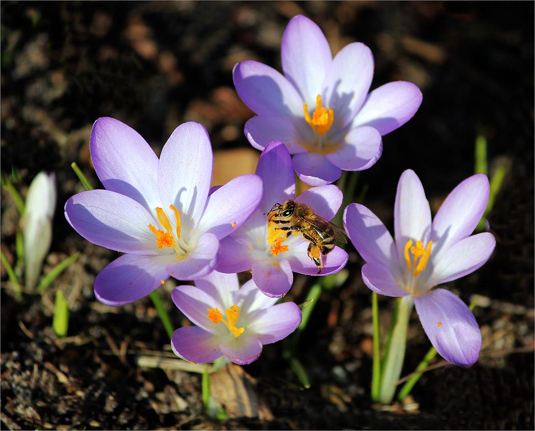 ... die 1. Biene