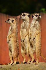 Die 3 Amigos !!!