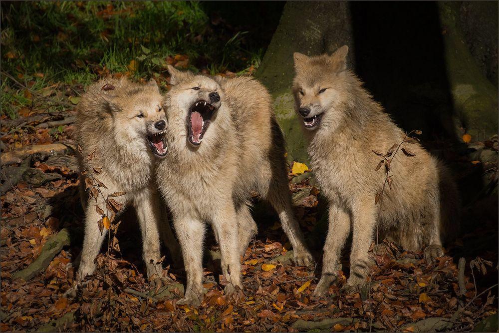 Die 3 Chorknaben ... ;-)