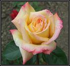Die 4 Namen Rose