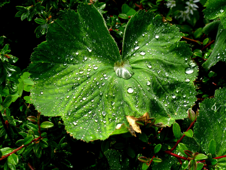 Die Aesthetik des Regens