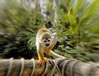 Die Affen rasen durch den Wald.............