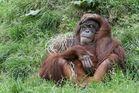 die Affenbande macht mich fix & fertig
