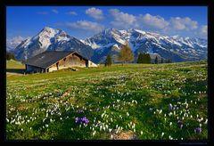 - - - Die Alphütte - - -