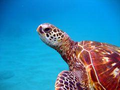 die alte Dame vom Kanapali Beach von Maui