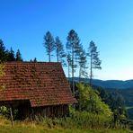 Die alte Viehhütte im Schwarzwald