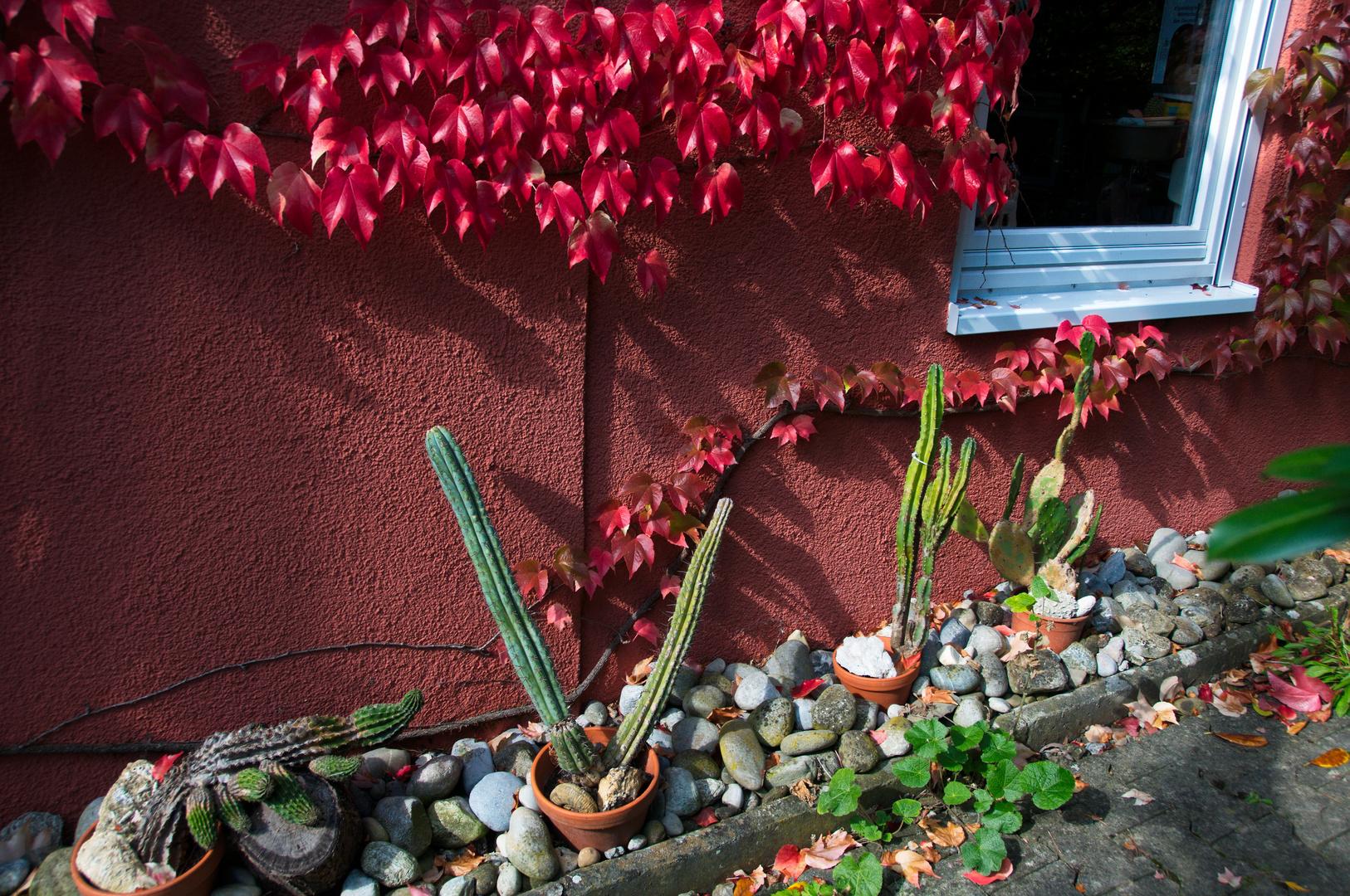 Die alten Kakteen wärmen sich in der Herbstsonne
