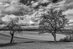 Die alten Obstbäume