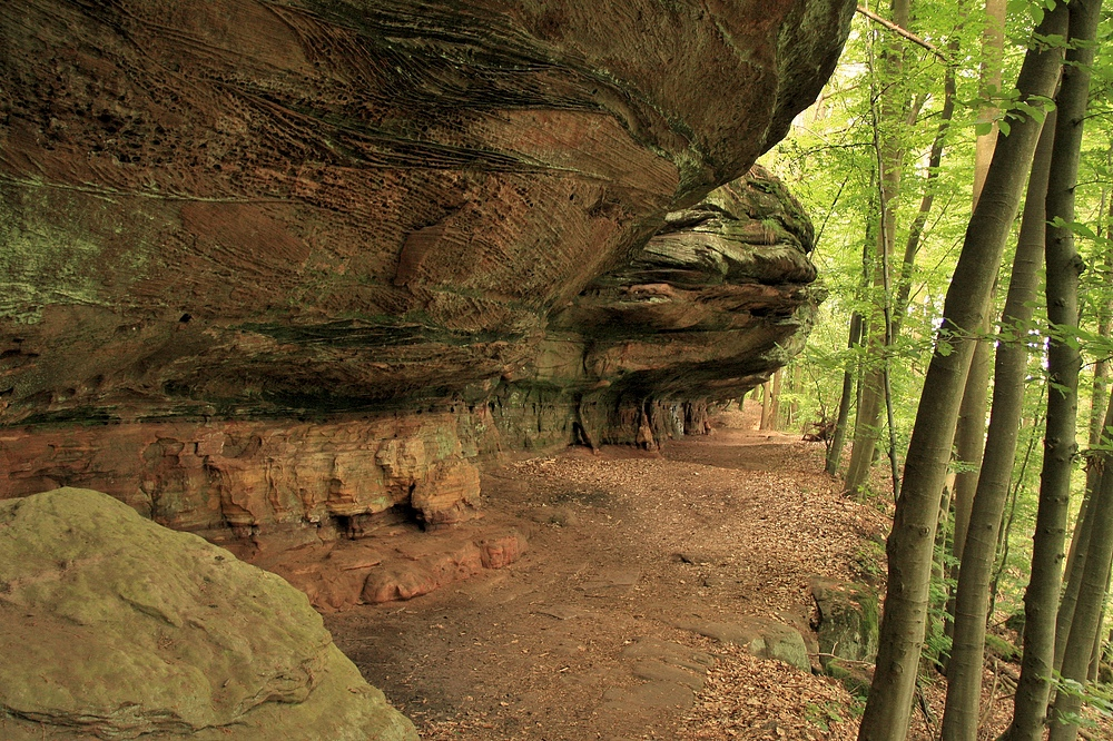 Die Altschlossfelsen sind eine Felswand aus Buntsandstein im Pfälzerwald 3