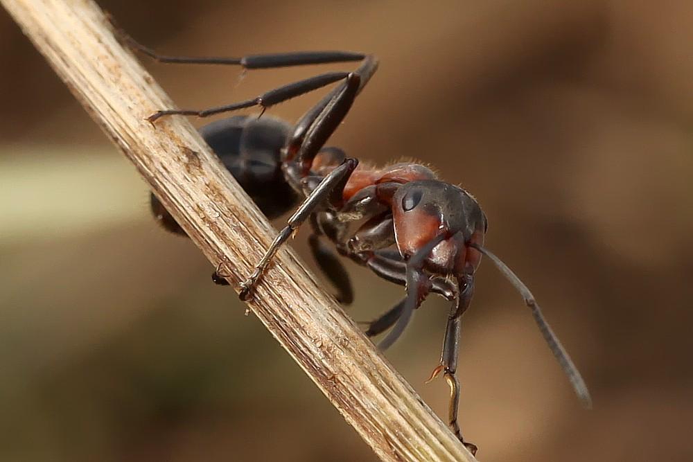 Die Ameisen sind aktiv!