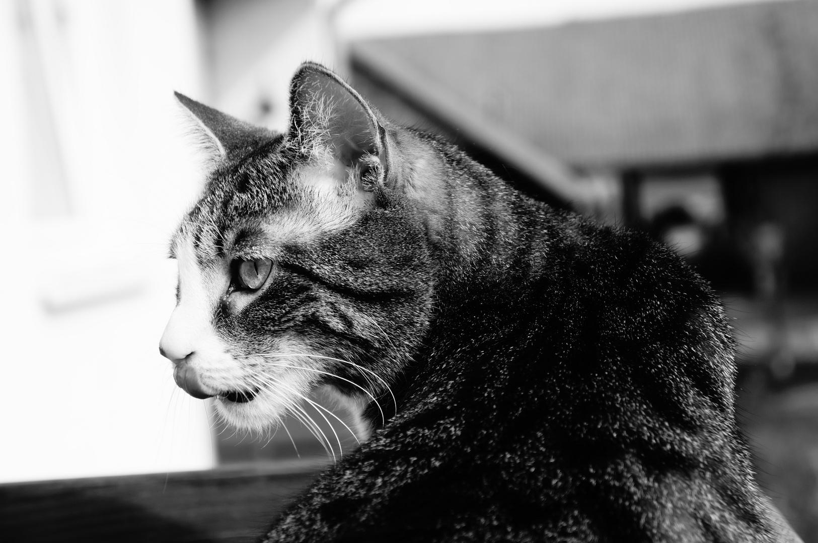 Die andere Katze