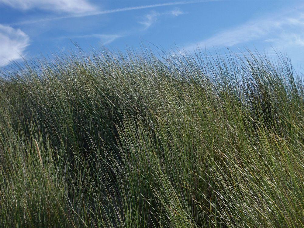 die andere Seite des Strandes ...